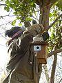 Putting up a nestbox at Gunnersbury Triangle.JPG