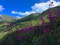 Puy de Sancy (Parc naturel régional des volcans d'Auvergne).jpg