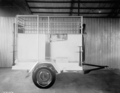 Queensland State Archives 1746 Cattle weighbridge June 1955.png