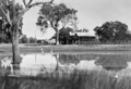 Queensland State Archives 2137 Pelicans on the River Jordan at Jericho March 1938.png