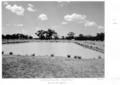 Queensland State Archives 5334 Watering facility Blacks Tank Charleville Quilpie January 1955.png