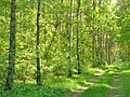Rahnsdorf - Waldweg (Woodland Path) - geo.hlipp.de - 36816.jpg