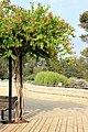 Ramat aNadiv park, Israel (12742883244).jpg