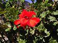 Redcolour flowers.jpg