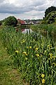 Reeds, flowers and a canal - geograph.org.uk - 1351895.jpg