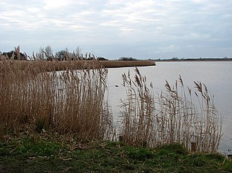 Horsey Mere - Image: Reeds growing by the mere geograph.org.uk 1103423