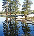 Reflection at Tuolumne Meadow, Yosemite 5-20-15a (18129753938).jpg