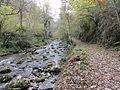 Reserva Natural Integral de Muniellos (Asturias, España) 01.JPG
