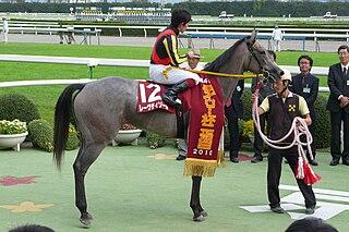 Reve dEssor Japanese Thoroughbred racehorse