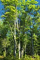 Reynolds Spring Natural Area (8) (28859181074).jpg