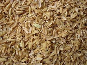 Rice hulls - Rice husk