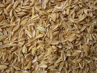 Chaff Protective casings of the seeds of cereal grain