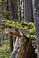 Riddle Lake and vicinity 06.jpg