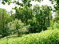 River Ayr Gorge woodlands - Ballochmyle.JPG