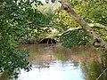River Derwent - geograph.org.uk - 1023425.jpg