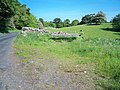Roadside bench - geograph.org.uk - 1339948.jpg
