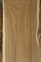 Robinia pseudacacia wood