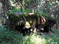 Rokytnice v Orlických horách, Panské Pole, R-S 70 (rok 2010; 06).jpg