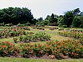 Rose Garden at the Arno - geograph.org.uk - 204439.jpg