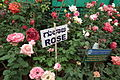 Rose flowers at lalbagh flower show 2011 7383.JPG