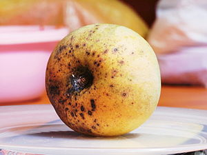 English: Rotten Mango Apple in Malaysia