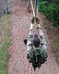 Royal Marines Commando Tests MOD 45161975.jpg