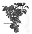 Roze fig. 81.png