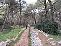 Running on island of Lošinj.jpg
