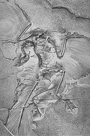 Archaeopteryx, the earliest known bird