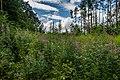 Sakaliny local biological reserve p08.jpg