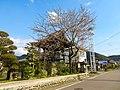 Sakura in Kakusen-ji (Sakahogi).jpg