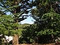 San Aselmo, CA USA - panoramio.jpg