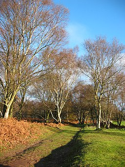 Sandstone Trail on Bickerton Hill - geograph.org.uk - 316788