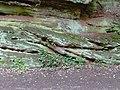 Sandstone by Tyrley Bottom Lock, Shropshire - geograph.org.uk - 1591063.jpg