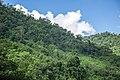 Sangu Reserve Forest 3.jpg