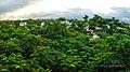 Sansari Village, Deolali, Maharashtra 422401, India - panoramio (38).jpg