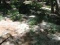 Santa Cruz River, Tumacacori National Historical Park (6127867634).jpg