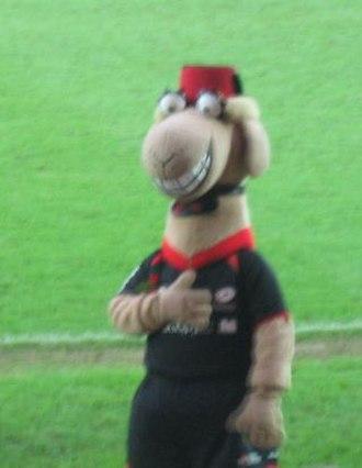 Saracens F.C. - Saracens mascot Sarrie the Camel