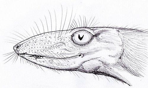 Scaloposaurus
