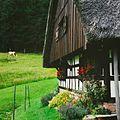 Schwarzwald Bauernhaus.jpg