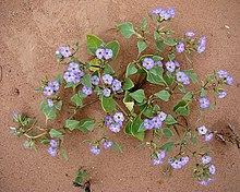 A szántóföldi növények betegségei. Növénykórtani ismeretek modul