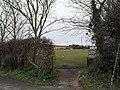Seagulls grazing on Paddock Lane Rec - geograph.org.uk - 1759076.jpg