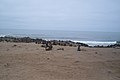 Seals on the Skeleton Coast (5833483294).jpg