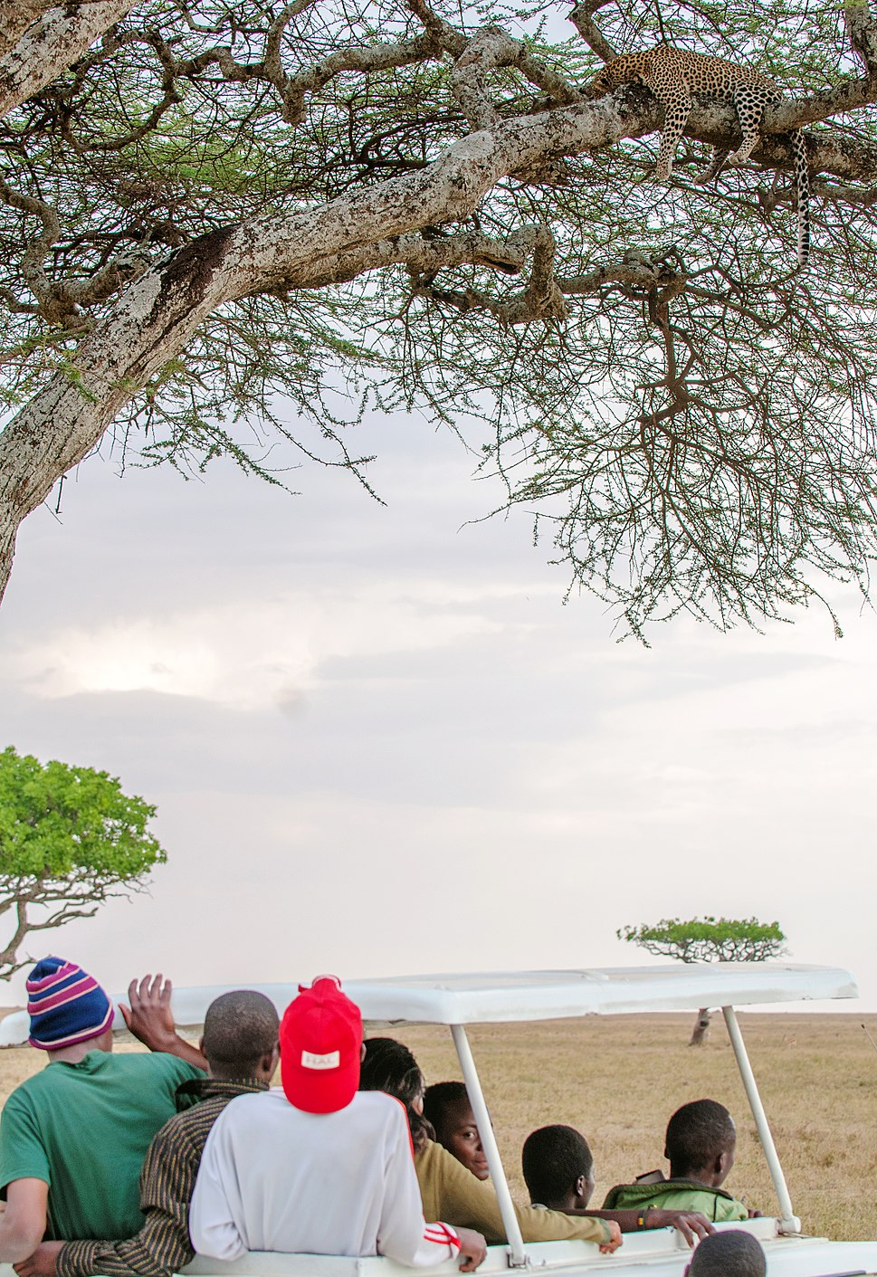 Serengeti Safari with Leopard