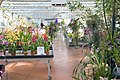 Serre orchidées Vacherot et Lecoufle.jpg