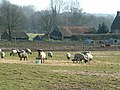 Sheep and Pigs at Heath Farm Wenhaston - geograph.org.uk - 362520.jpg