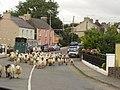 Sheep at Anascaul bridge - geograph.org.uk - 108753.jpg