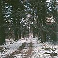 Shenandoah National Park (13082175403).jpg