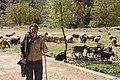Shepherd-Likouria Achaea Peloponnese Greece.jpg