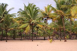 Marari Beach - Marari beach shoreline